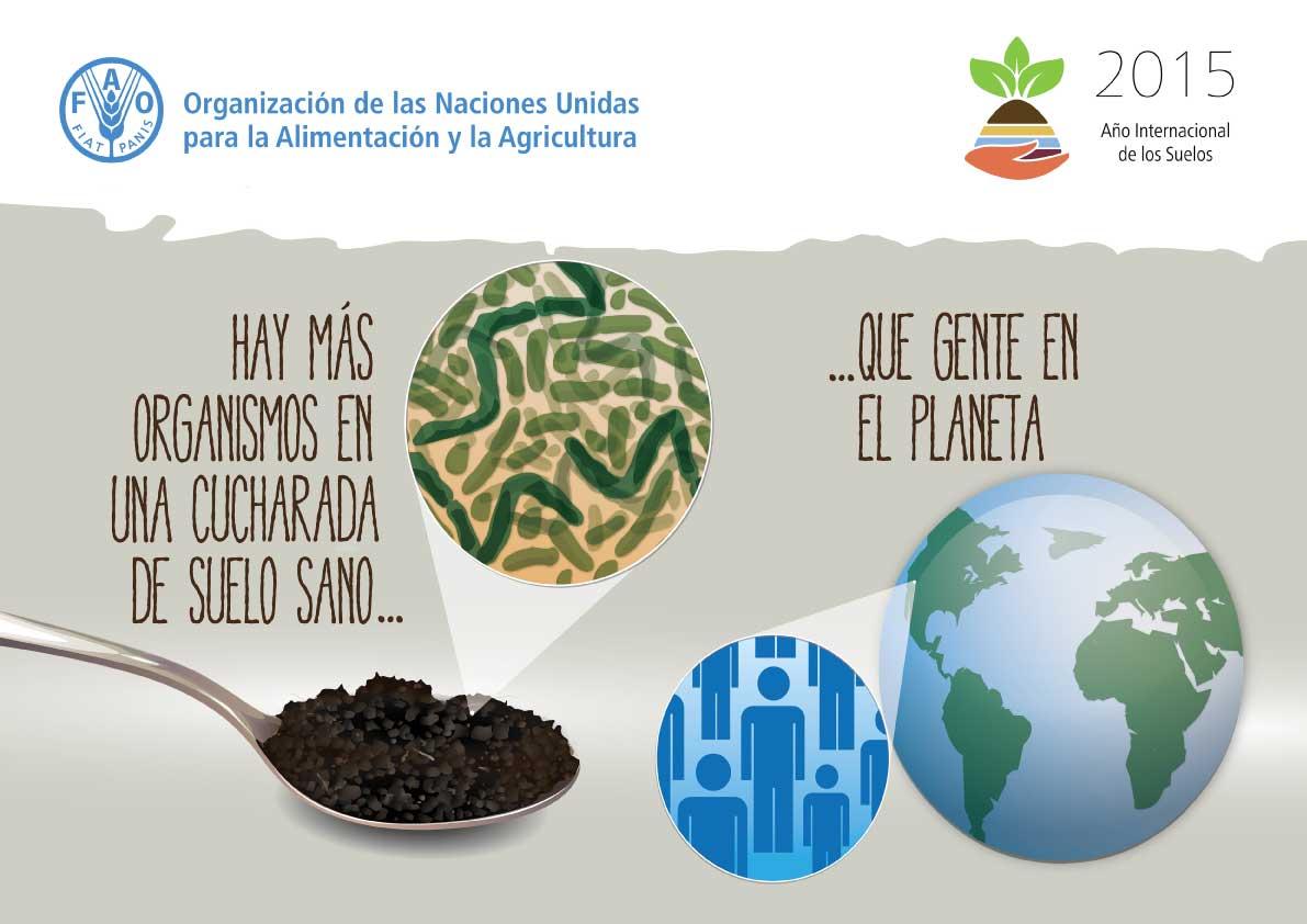 Tiempo de actuar 2015 a o internacional de los suelos for Importancia de los suelos